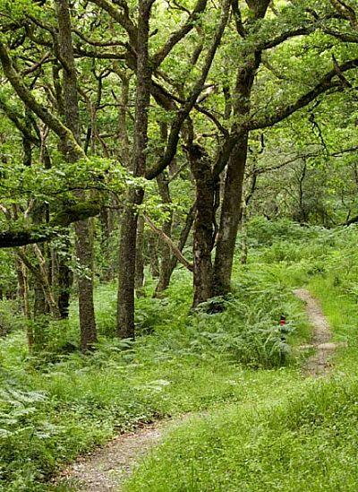woodland path at barnluasgan